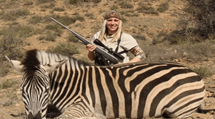 Bear Slaying Barbarian Tries Going Global – Larysa Switlyk website – Larysa Switlyk's attempt to go global with a new website sharing imagery of her slaying bears and zebras is proof that this woman is nothing but an international menace and monster.